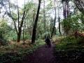 Aptos Creek Trail 1