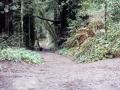 Aptos Creek Trail End