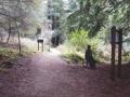 Aptos Creek Trail and Split Stuff Trail