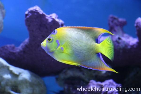 04_Aquarium in Visitor Center