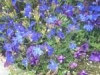 alaskan-flowers-juneau