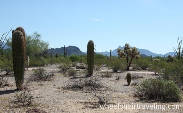 2_nature trail thru desert.JPG