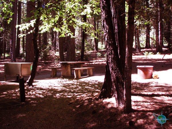 calaveras_big_trees_9