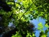 calaveras_big_trees_10