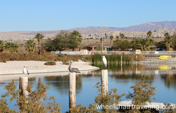 7_Birds in marina, Visitor Center in background.JPG