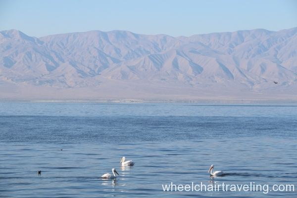9_Pelicans in Salton Sea.JPG