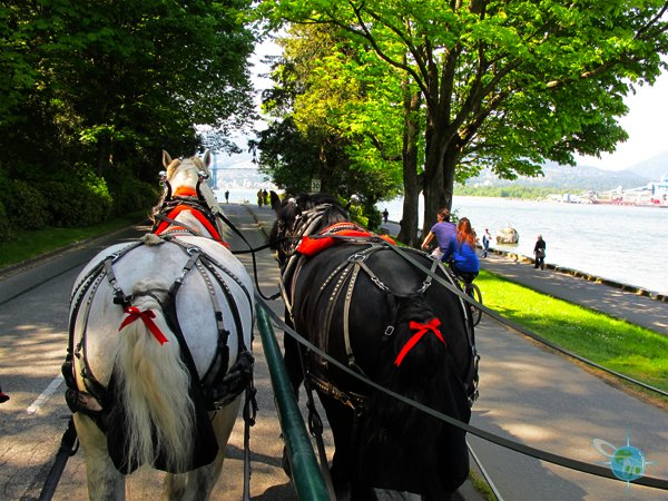 Stanley Park Carriage Ride