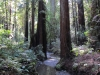 Armstrong Redwoods State Natural Reserve