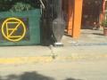 costa_rica13