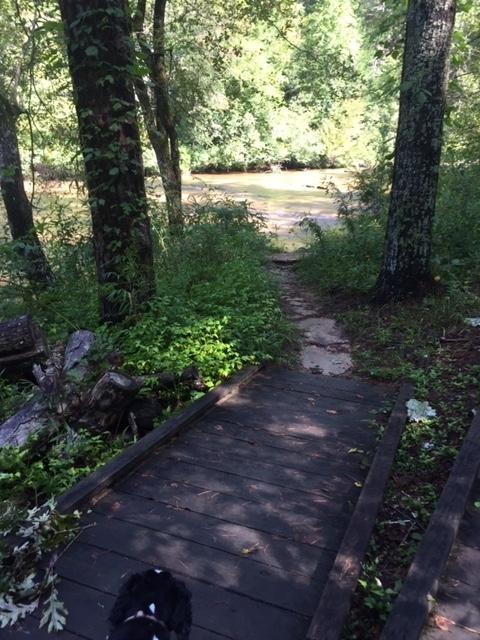 Amicalola-river-trail-10