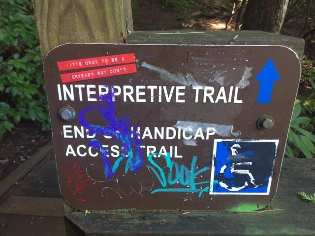Amicalola-river-trail-36