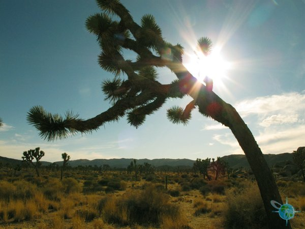 joshua_tree_national_park_13