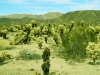 joshua_tree_national_park_6