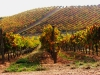 livermore_wine_country_14
