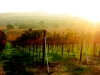 livermore_wine_country_21