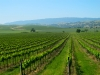 livermore_wine_country_24