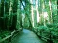 muir_woods_1.jpg