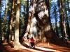humbodlt_redwoods_11