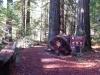 humbodlt_redwoods_2