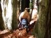 humbodlt_redwoods_4