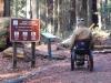 humbodlt_redwoods_5