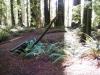 humbodlt_redwoods_6