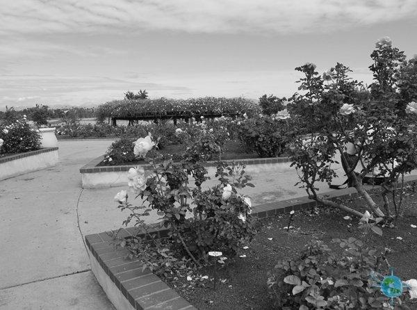 san_diego_balboa_park_gardens_11