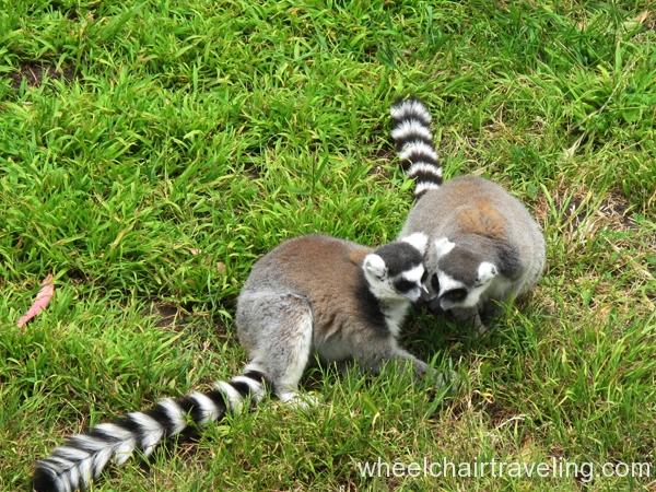 Lemur Cafe Sf Zoo Menu