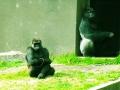 san_francisco_zoo_2.jpg