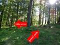 Shenandoah_picnic_area11
