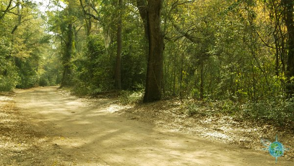 Road to the Angel Oak