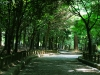 Pathway to Shrine at Nara Park