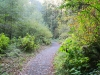Fern Canyn Trail