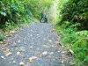 Fern Canyn Trail (1st Hill)