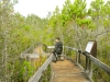 """Discovery Trail"" at Pygmy Forest"