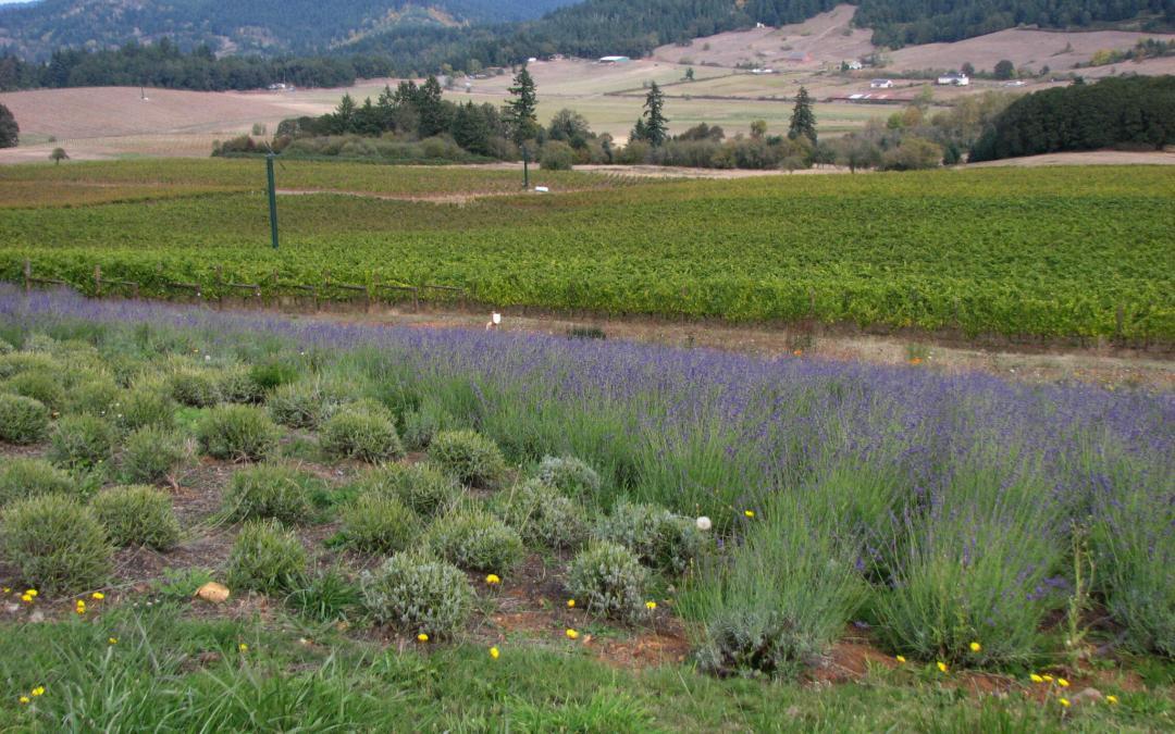 Visit the King Estate Winery in Eugene, Oregon