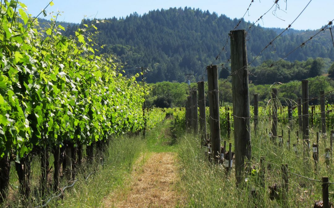 CA Sonoma Wine Country Accessible Travel Tips