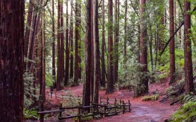 Oakland, CA Redwood Regional Park Access