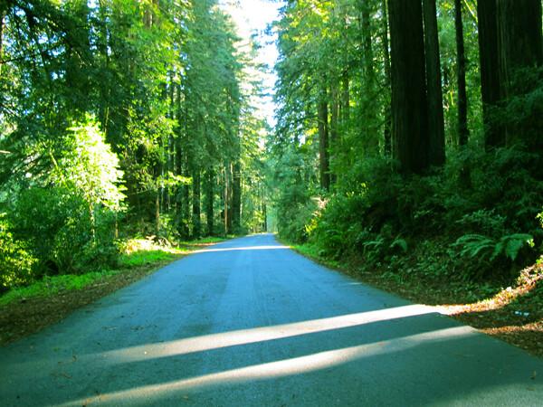 California State Park: Samual P. Taylor