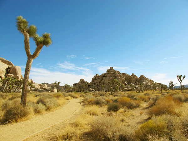 Palm Springs & Palm Desert Travel Guide