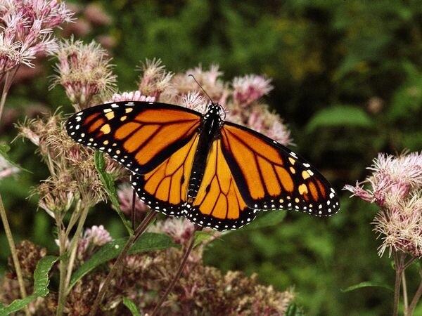 Monarch Grove Sanctuary in the Monterey Bay Area