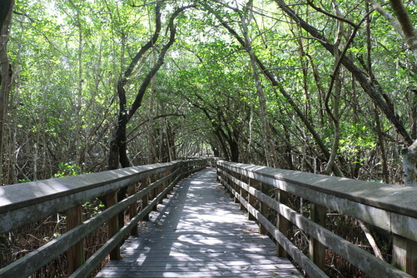 Florida Everglades National Park Wheelchair Access Guide