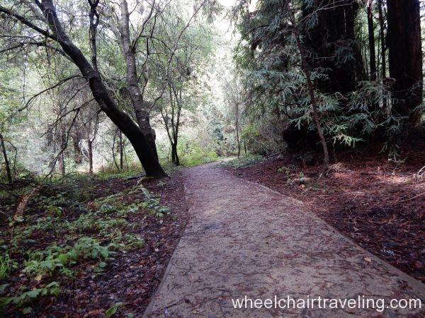 Waggnor Trail 1