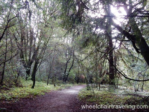 Waggnor Trail 2