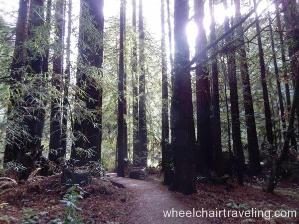 Waggnor Trail
