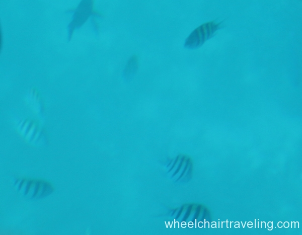 20_Fish Beneath Glass Bottom Boat
