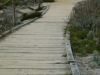 asilomar_state_beach10