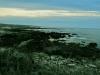 asilomar_state_beach13