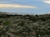 asilomar_state_beach7