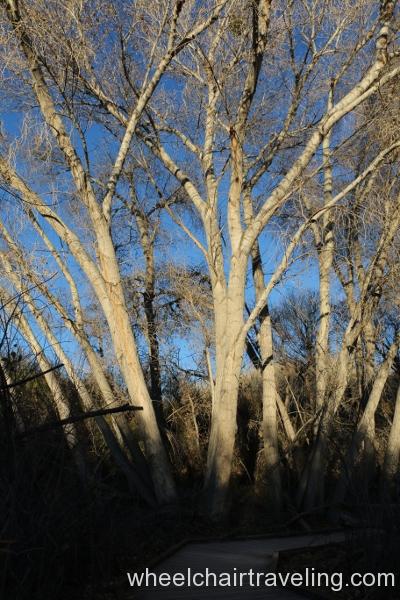 4_Trees on Marsh Trail